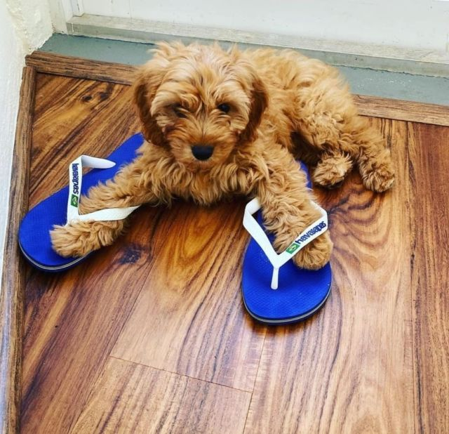 Every member of the family approves 🐶 of our #flipflops😉 . . . . .  #LetsSummer #I❤️Havaianas #HavaianasSA #MadeinBrazil #HavaianasMoment #flipflops